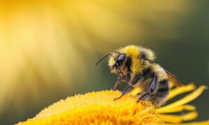Life in the Meadow, Bees Are Essential Pollinators
