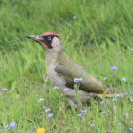 Life in the Meadow: Common Birds